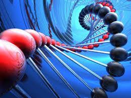 Цена определения родства по ДНК